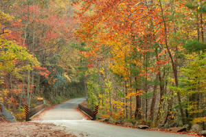 Autumn River Road