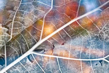 Vibrant Leaf Decay