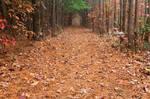 North Point Pine Trail