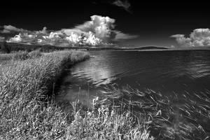 Beaver Brook - Black and White