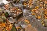 Orange Grove Stream (freebie)