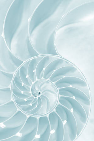 Frosty Nautilus Spiral