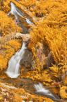 Gold Buttermere Falls