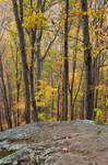 Autumn Crabtree Forest