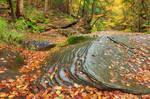 Autumn Sullivan Forest