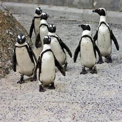 Penguin Posse (freebie)