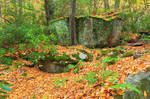 Quehanna Wild Autumn Forest