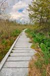 Cranesville Swamp Boardwalk Trail (freebie)