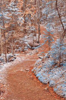 Winding Winter Wonderland