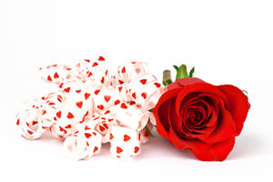 Ribbon Love Rose II