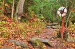 Lifebuoy Forest Trail