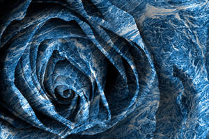 Tsunami Rose