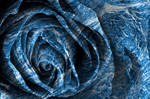 Tsunami Rose by boldfrontiers