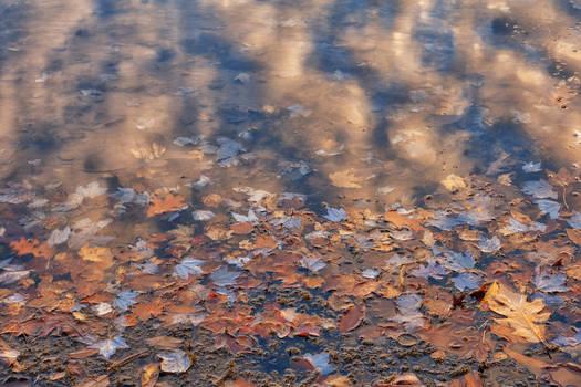 Fluid Zen Foliage (freebie)