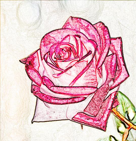 Unfading rose. by Mladavid