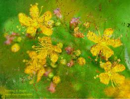 Healing Vision by DorothyPugh