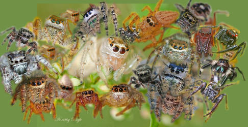 Spiders I Have Loved