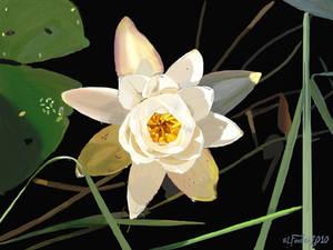 Blackwater Lotus Flower II