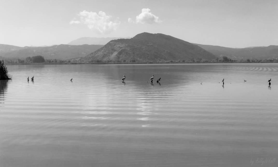 Birds in Lake Pamvotida by BillyNikoll