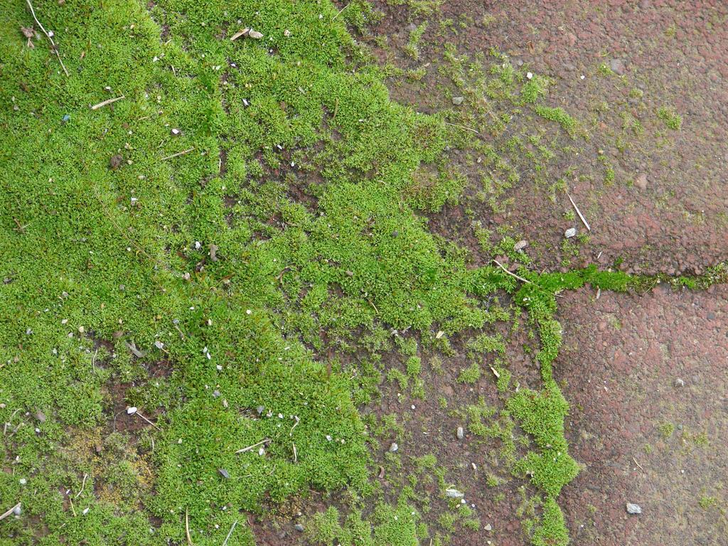 c date Moss