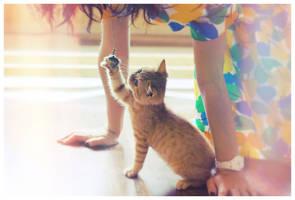 newcat1 by marymarycherry