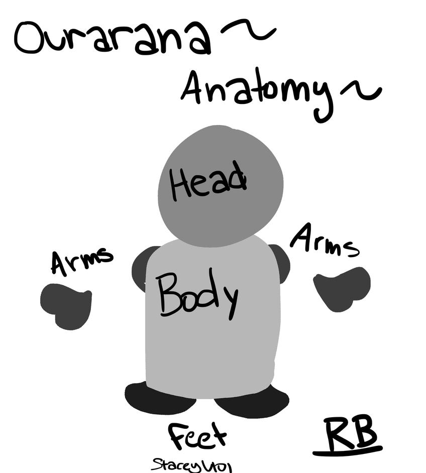 .:Ourarana RB Anatomy:. by SleepyStaceyArt