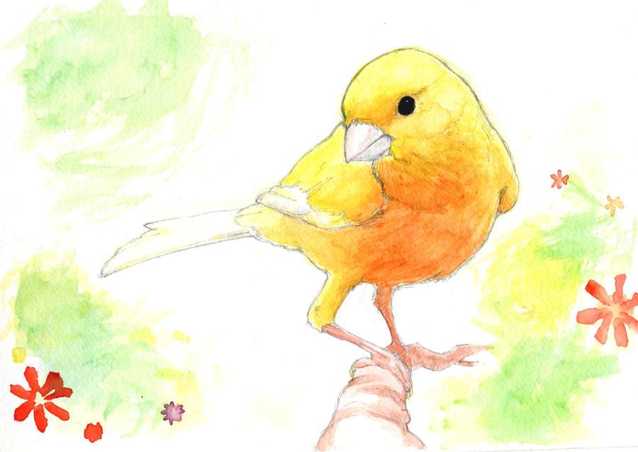 Orange Canary By MondoArt On DeviantArt