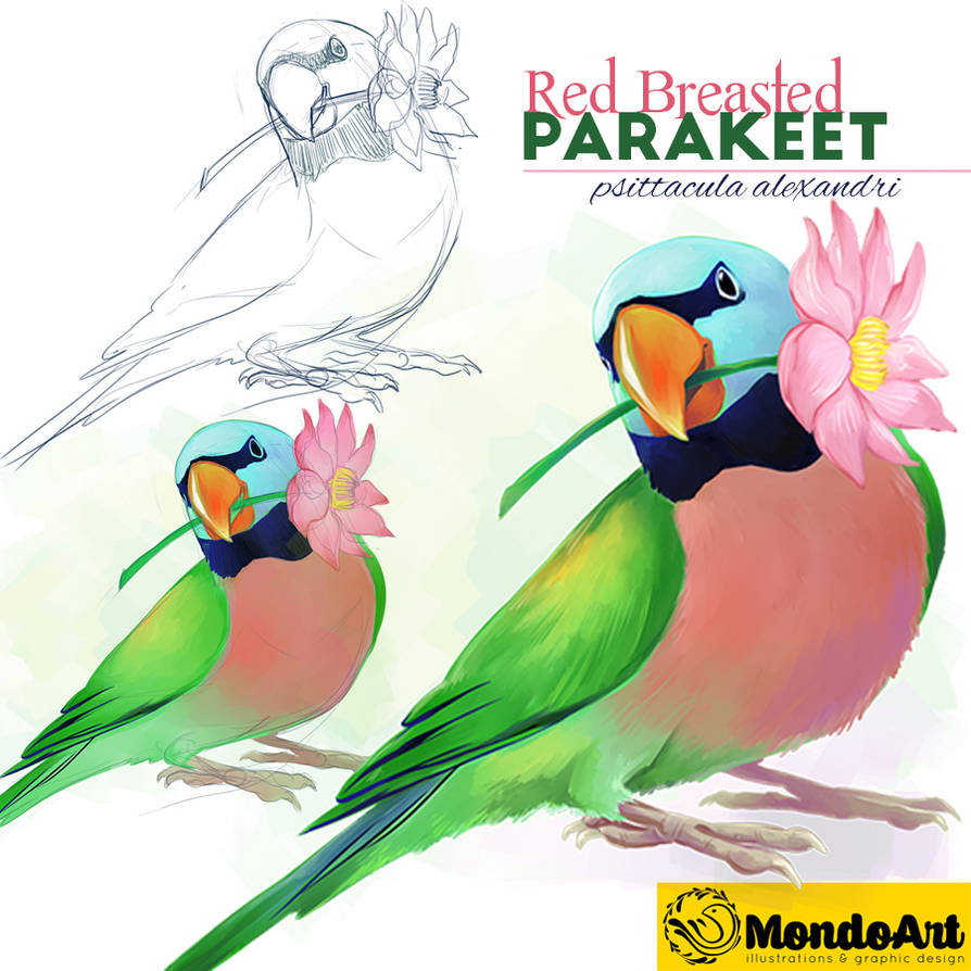 red breasted parakeet steps by MondoArt on DeviantArt