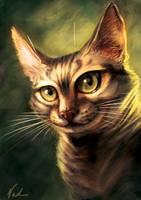 Cat by kinkajoomotion