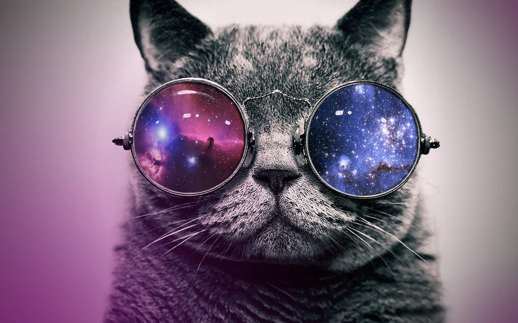 hipster cat tumblr background - photo #17