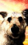 Szelka the dog