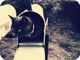 Cat Mail by JamesDarrow