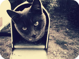 Cat Mail II by JamesDarrow