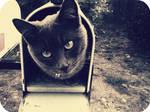 Cat Mail II