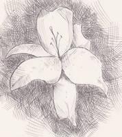 Lily by JamesDarrow
