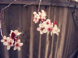 Spring by JamesDarrow