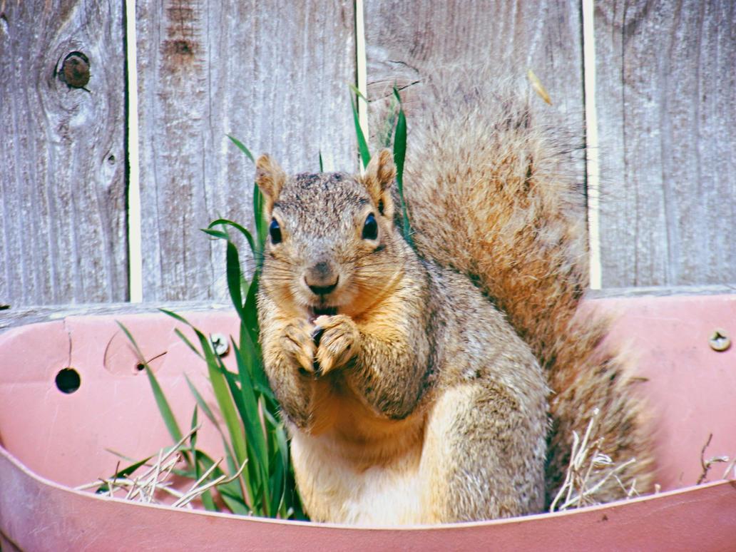 Praying Squirrel by JamesDarrow