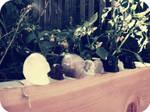 Garden Skulls