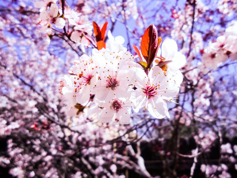 Spring 2015 by JamesDarrow