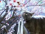 Springtime Aurora