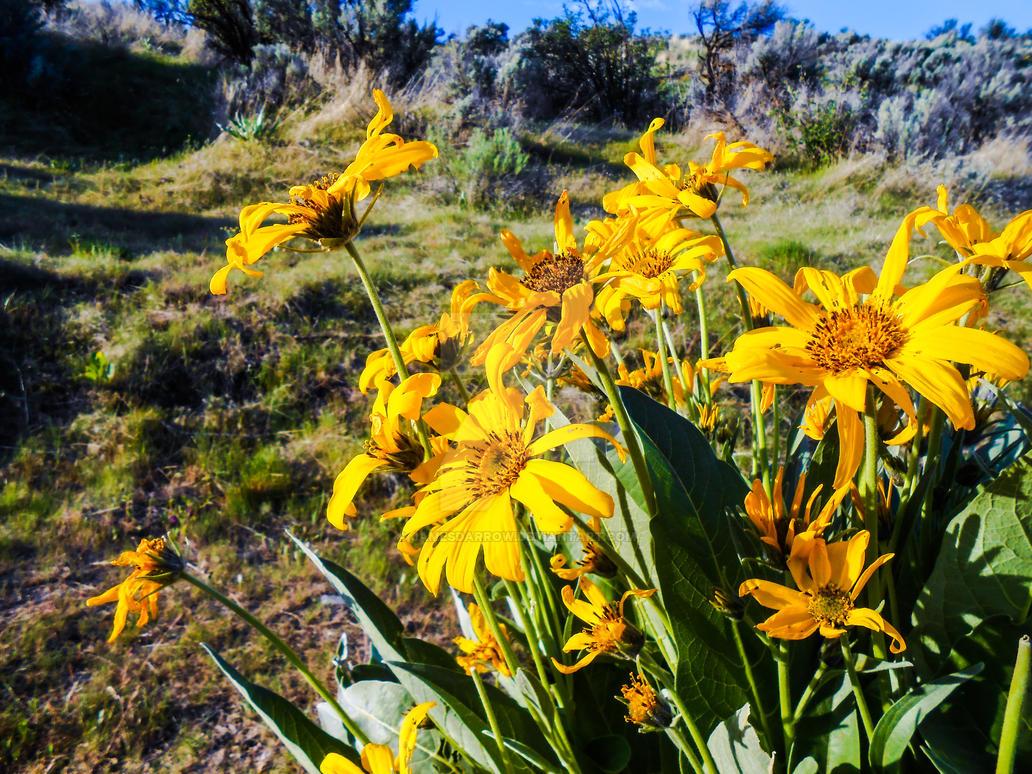 Wildflowers by JamesDarrow