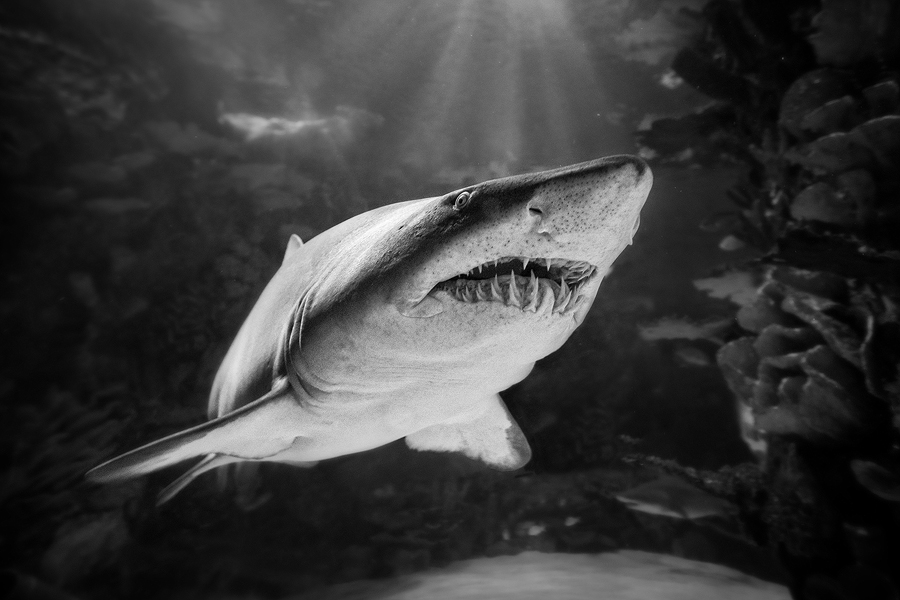 ...jaws II... by roblfc1892