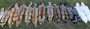 Fourteen shades of Fox