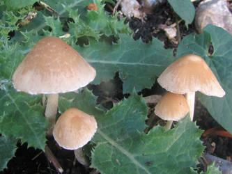 Mushroom quad by Sia-Mon