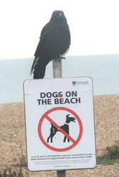 Yes to crows, no to dogs by Sia-Mon