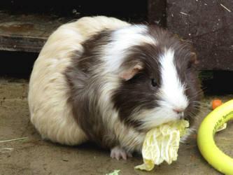 Yummy lettuce by Sia-Mon