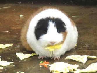 Fat piggy by Sia-Mon
