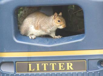 Bin squirrel by Sia-Mon