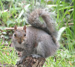 Squirrel stand by Sia-Mon