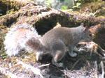 Bog squirrel by Sia-Mon